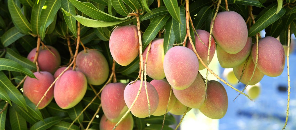 domestication-of-fruit-trees-to-enhance-family-nutrition-food-security-environmental-conservation-and-income-generation
